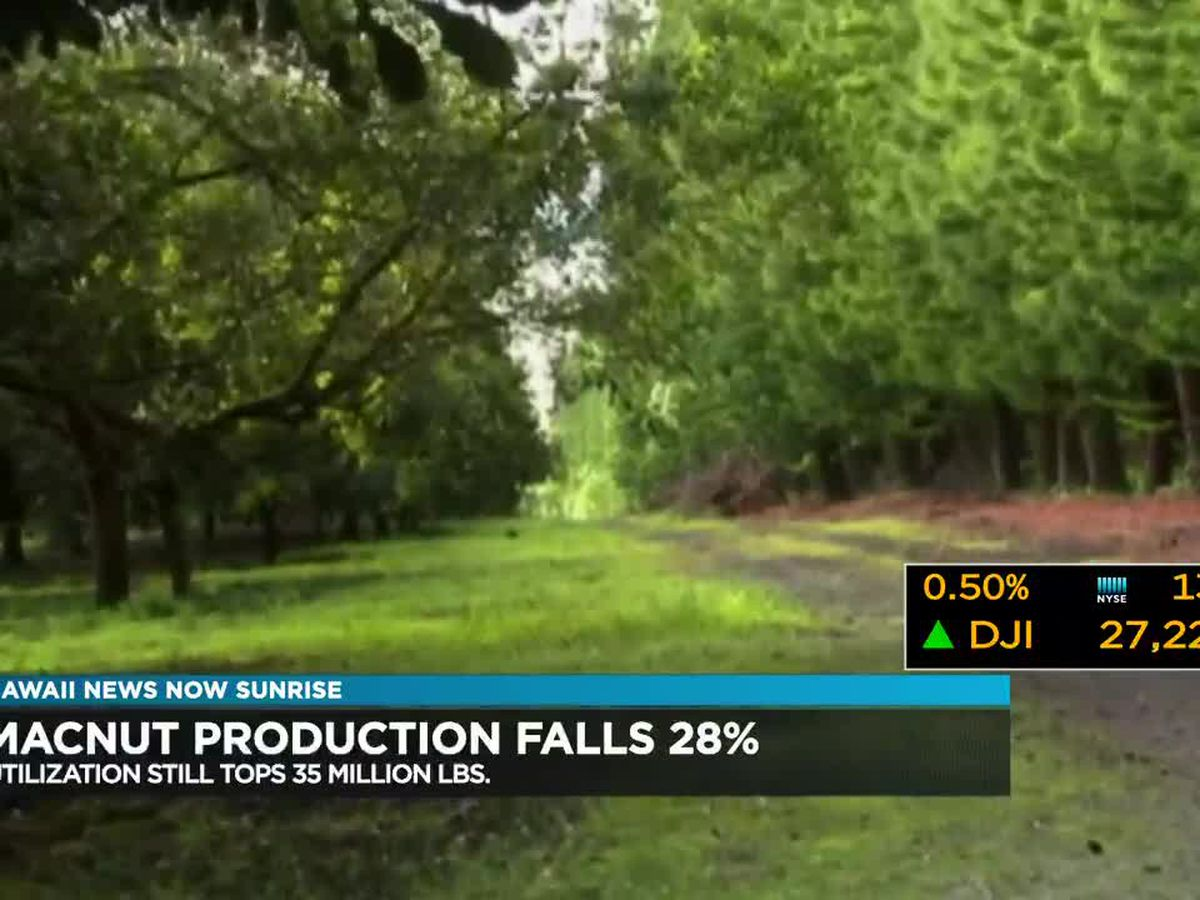 Business Report: Macadamia Nut production falls from previous season