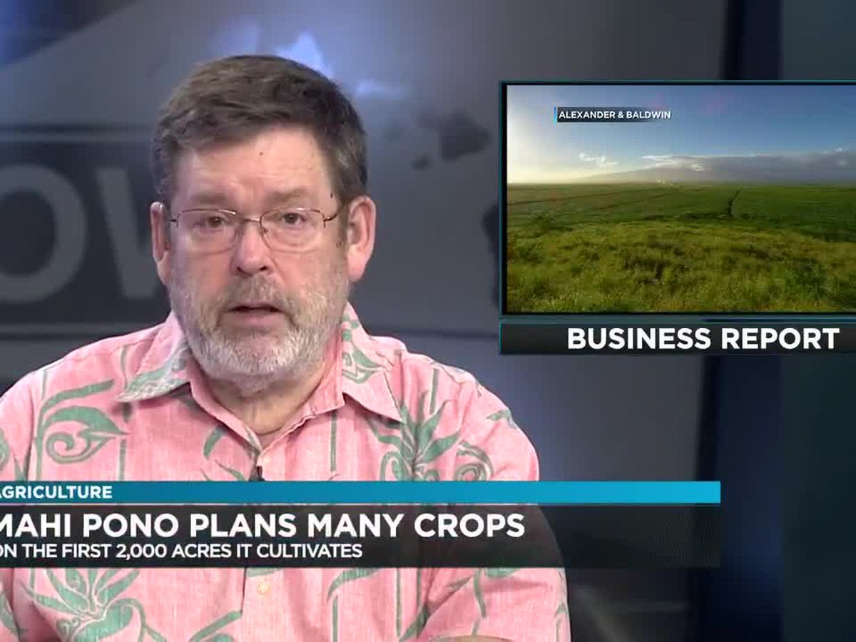 Business Report: Mahi Pono growth plans, Ke Ao Hali'l funds, Kauai budget hearing