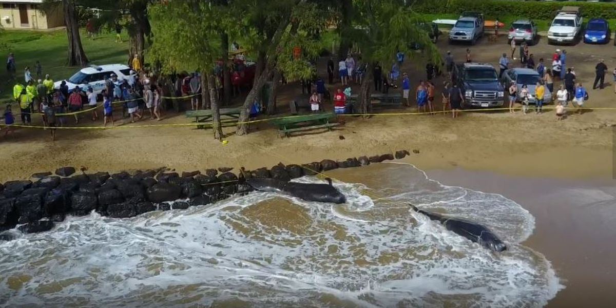 Navy rules out sonar use as cause of mass whale stranding on Kauai
