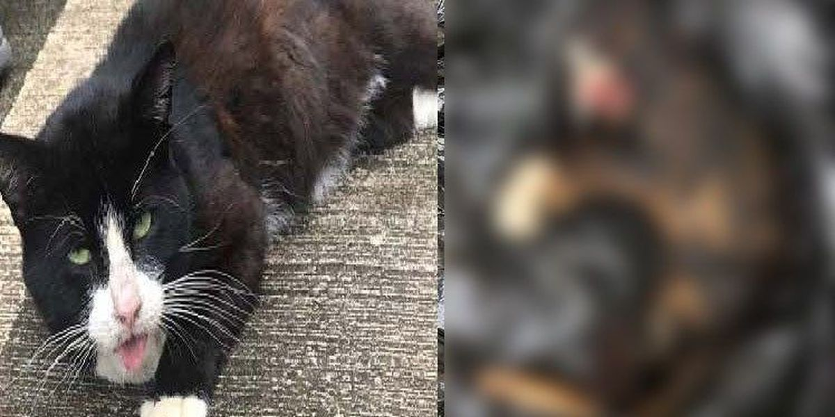Cat Burned To Death