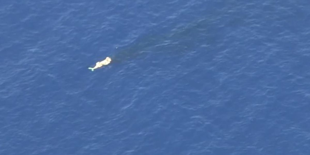 Whale carcass prompts shoreline access closure on Maui
