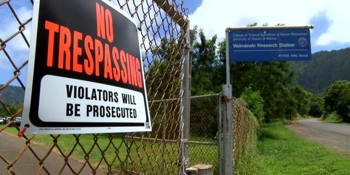 Waimanalo family claims UH hemp study land belongs to them