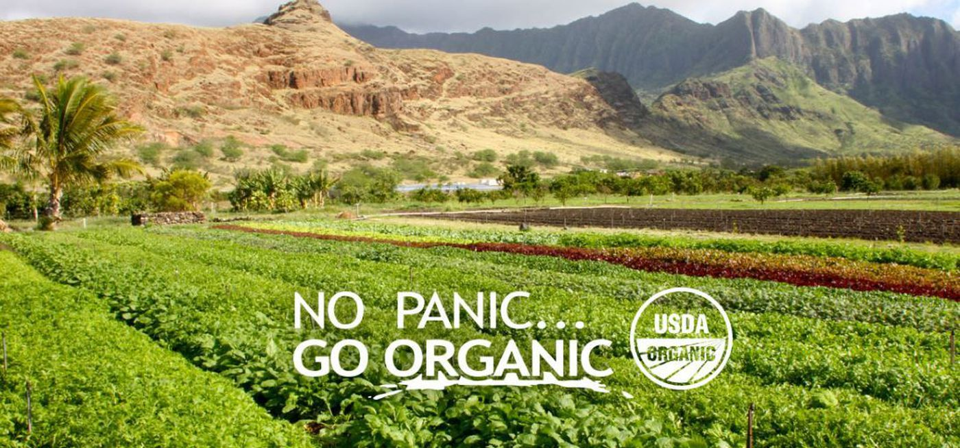 Organic Produce Farm In Waianae Gets Funding To Expand Creating Jobs