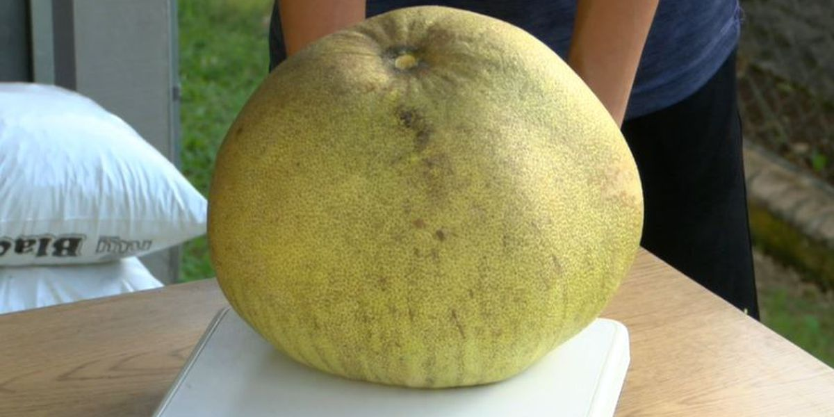 Holy jabong! A Moanalua family says this fruit sets a world-record