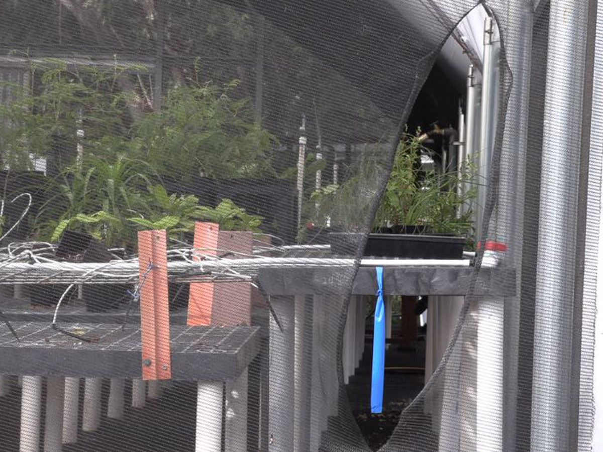 Vandals strike a DLNR greenhouse, home to extremely rare native plants