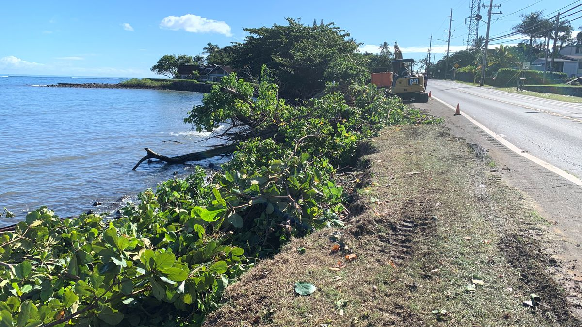 North Shore homeowner chops down shoreline trees, prompting erosion fears