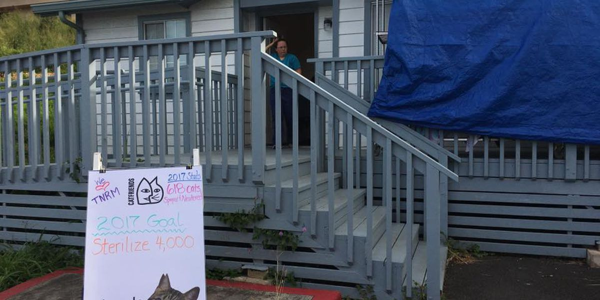 Cat sterilization non-profit seeks new home after losing lease