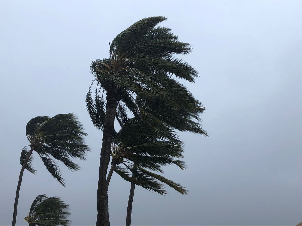 Wind advisory posted for gusty northeast trade winds