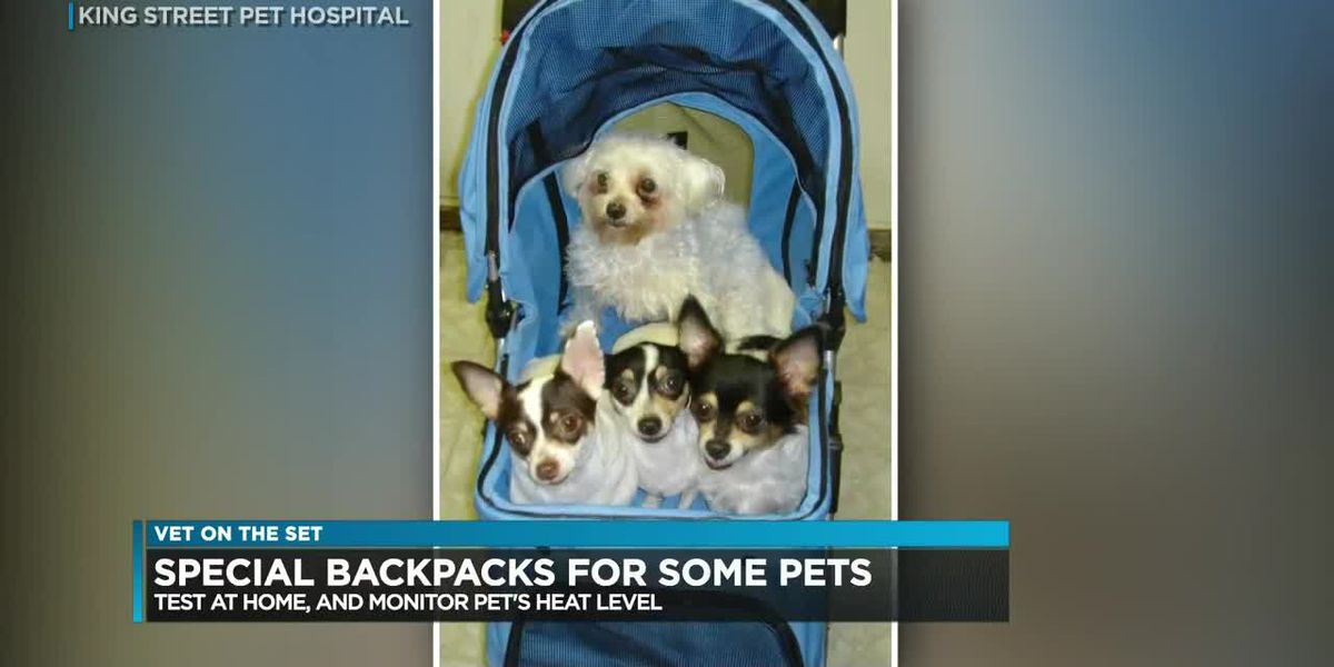 Vet on the Set: How to safely secure your pet outdoors