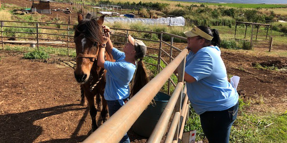 They came together to rescue horses. Now they're the ones in need of help