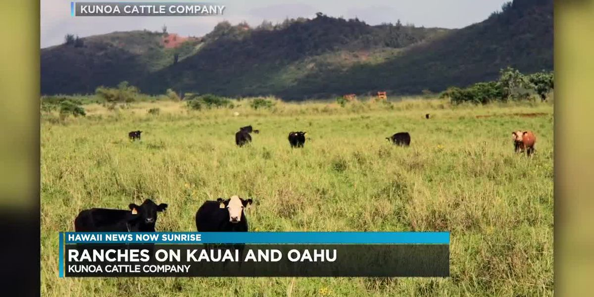 Local meat producer expands operations on Oahu and Kauai