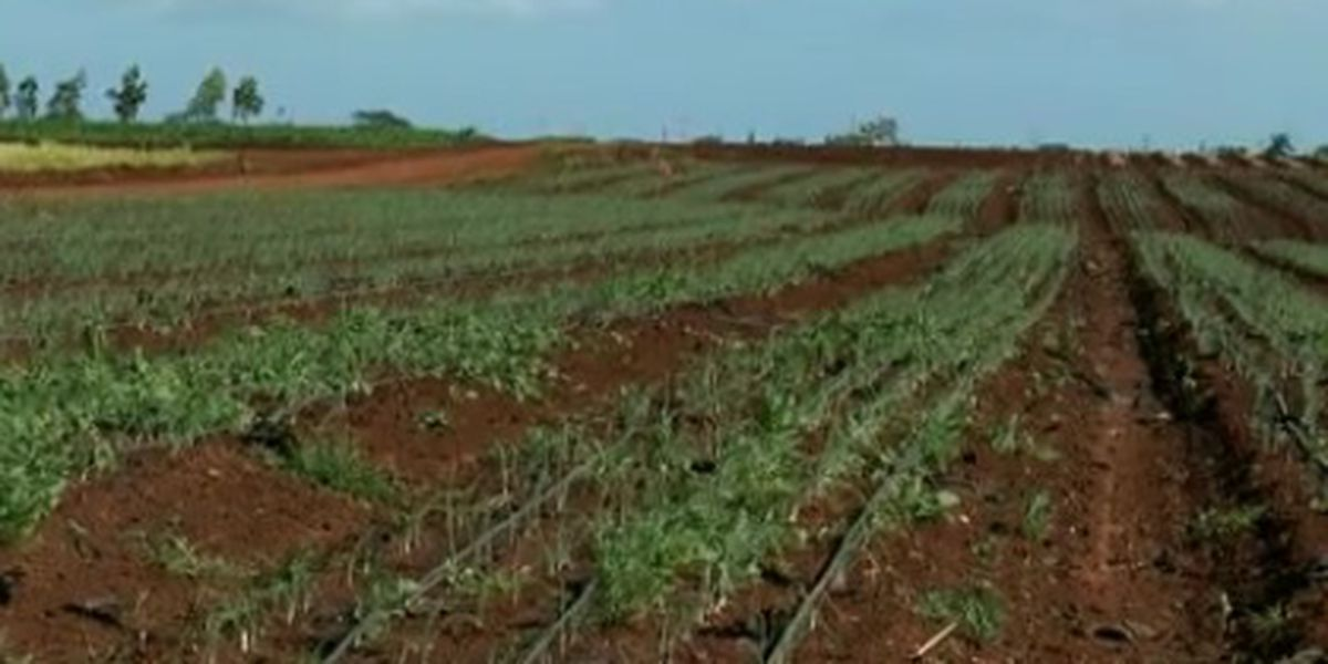 Plan to allow solar farms on top-rated agricultural lands dealt setback