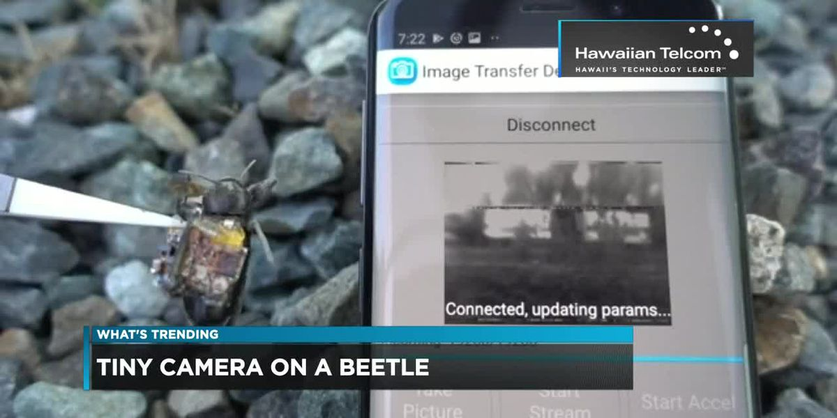 What's Trending: Beetles with cameras & Harry Potter makeup