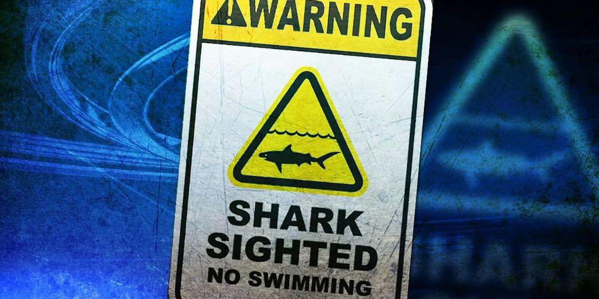 Shark warning signs posted at Laniakea Beach on Oahu's North Shore