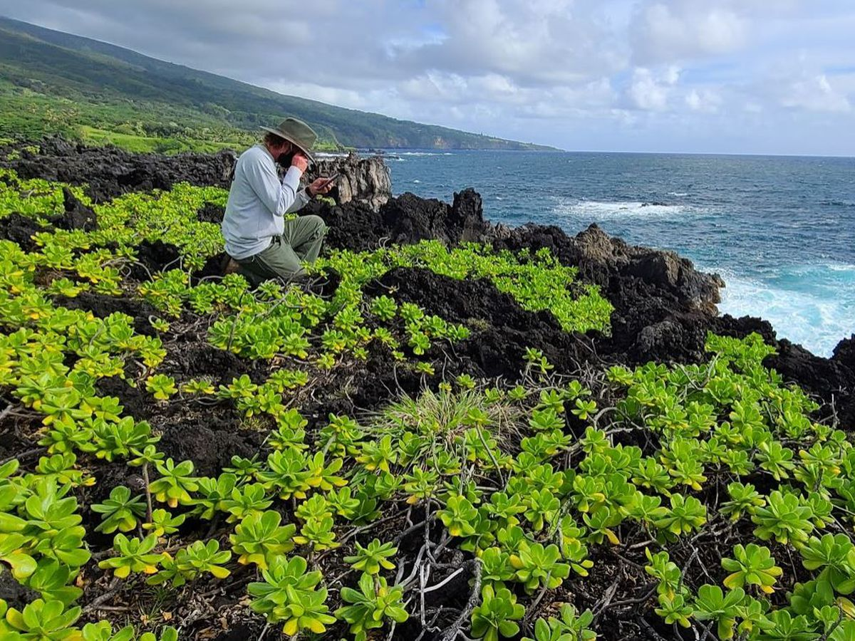 For 30 years, Haleakala National Park was their office. Their mission: Saving native plants.