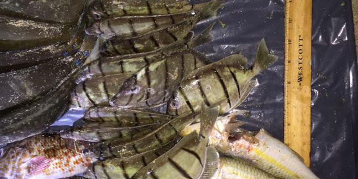 Fishermen cited for illegal catches in Waimanalo