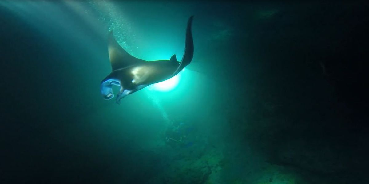 DLNR drafts rules for West Hawaii manta ray viewing sites