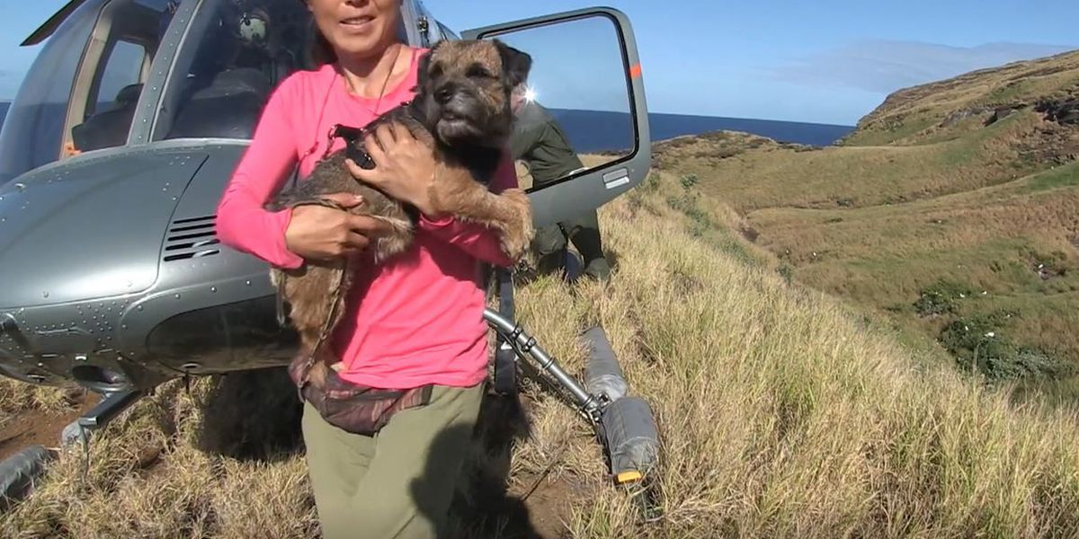 Rat-sniffing dogs deployed to Lehua Island to find surviving rodents