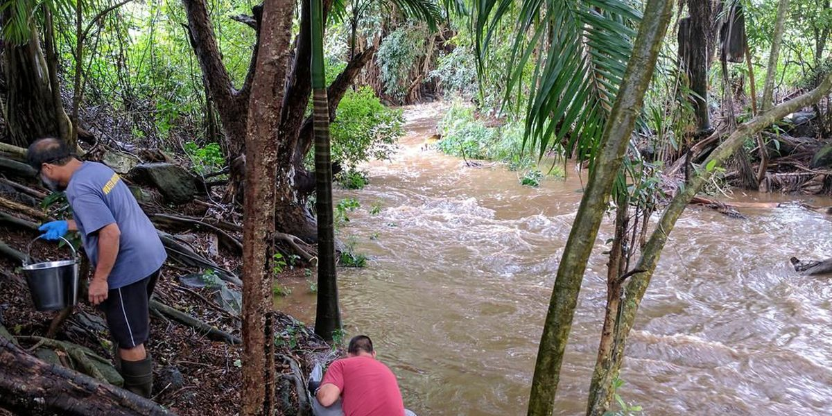 Health Department says overflowing cesspools polluting Kauai stream