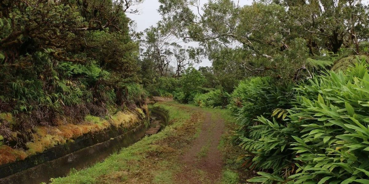 Hawaii department proposes rule changes at forest reserves