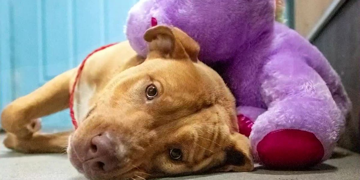What's Trending: Stray dog's obsession with toy unicorn leads to his adoption