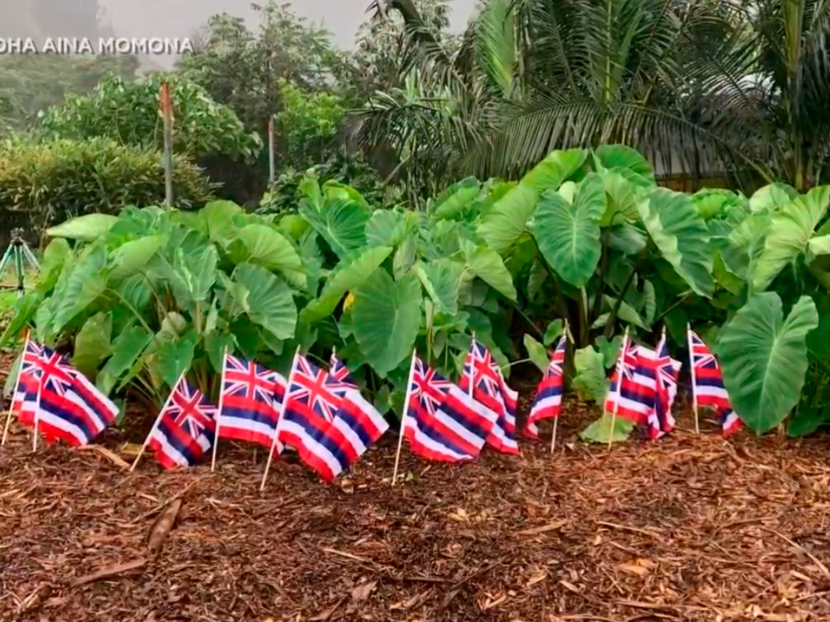 10K kalo starters, Hawaiian flags to be given out at the state Capitol Wednesday