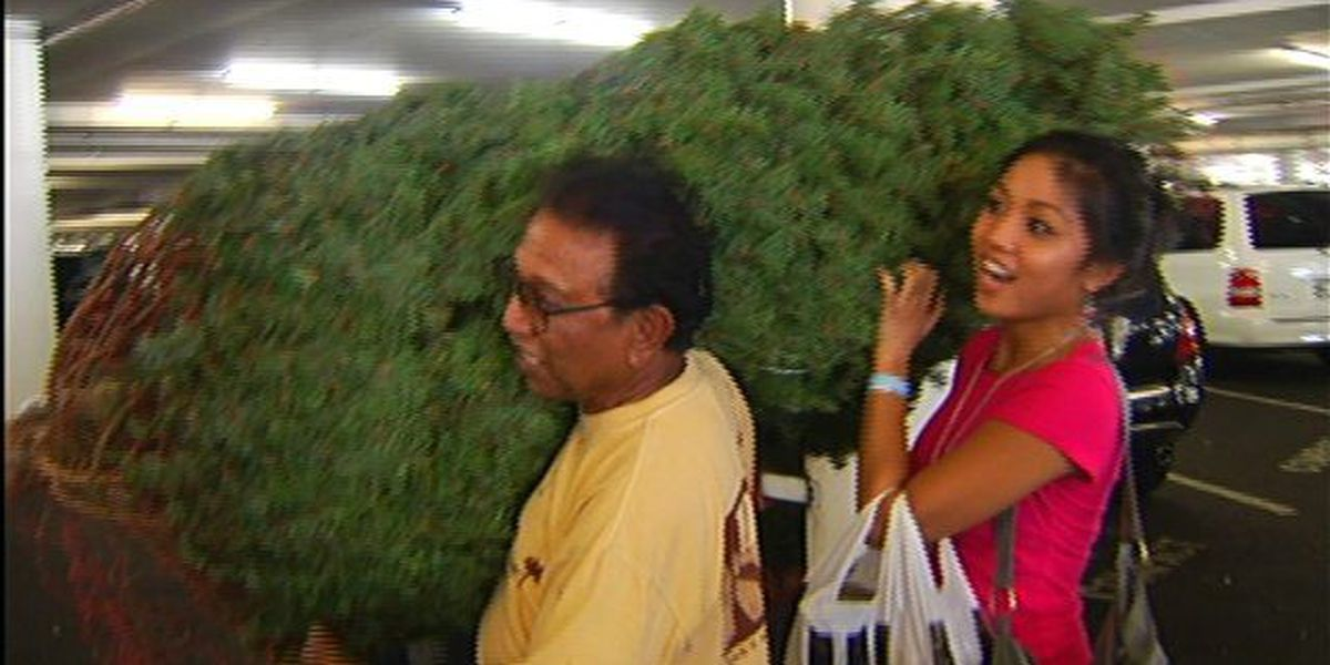 - Crowds Line Up For Christmas Trees In Honolulu