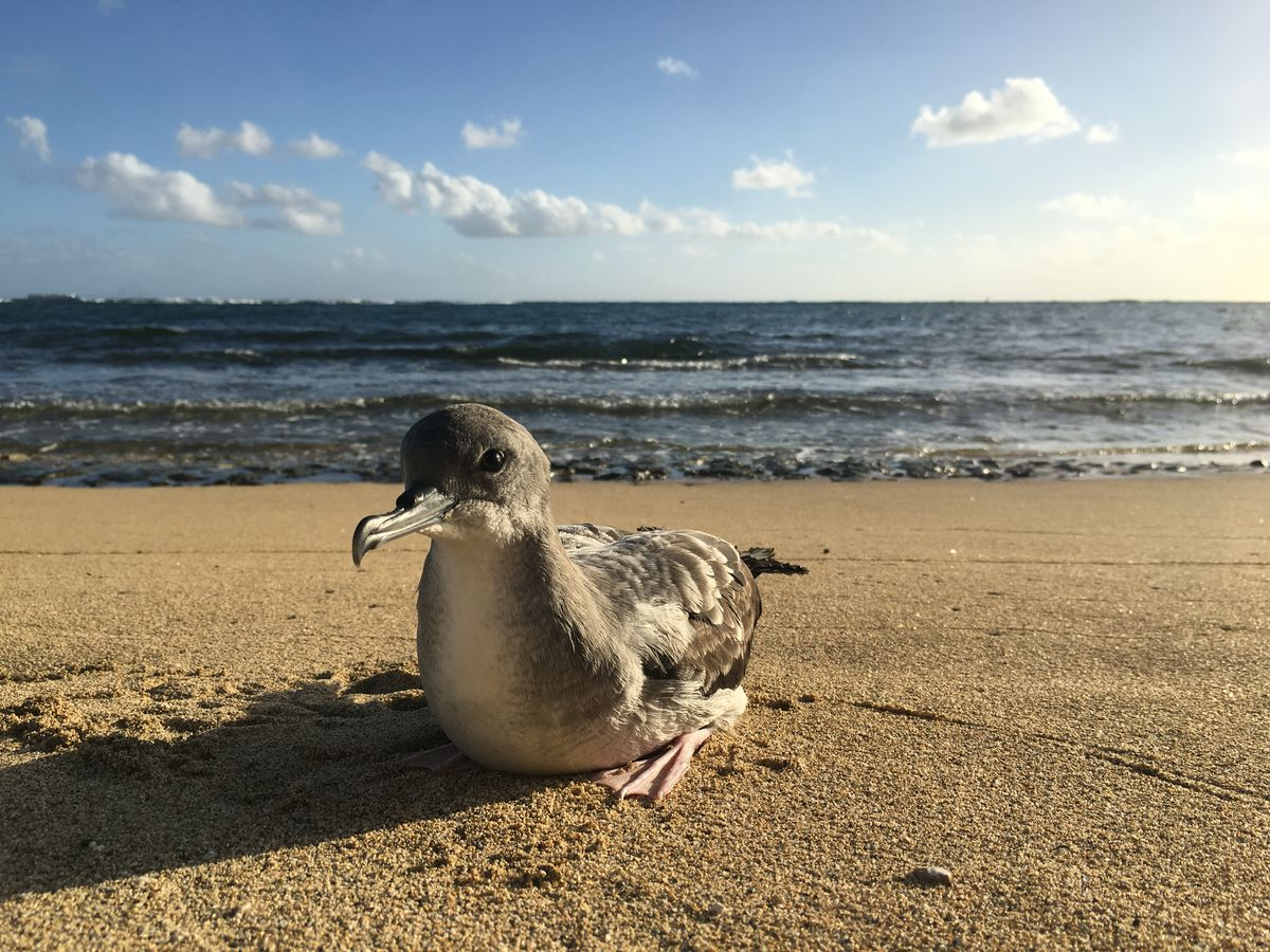 Keep an eye out for injured seabirds throughout the holiday season