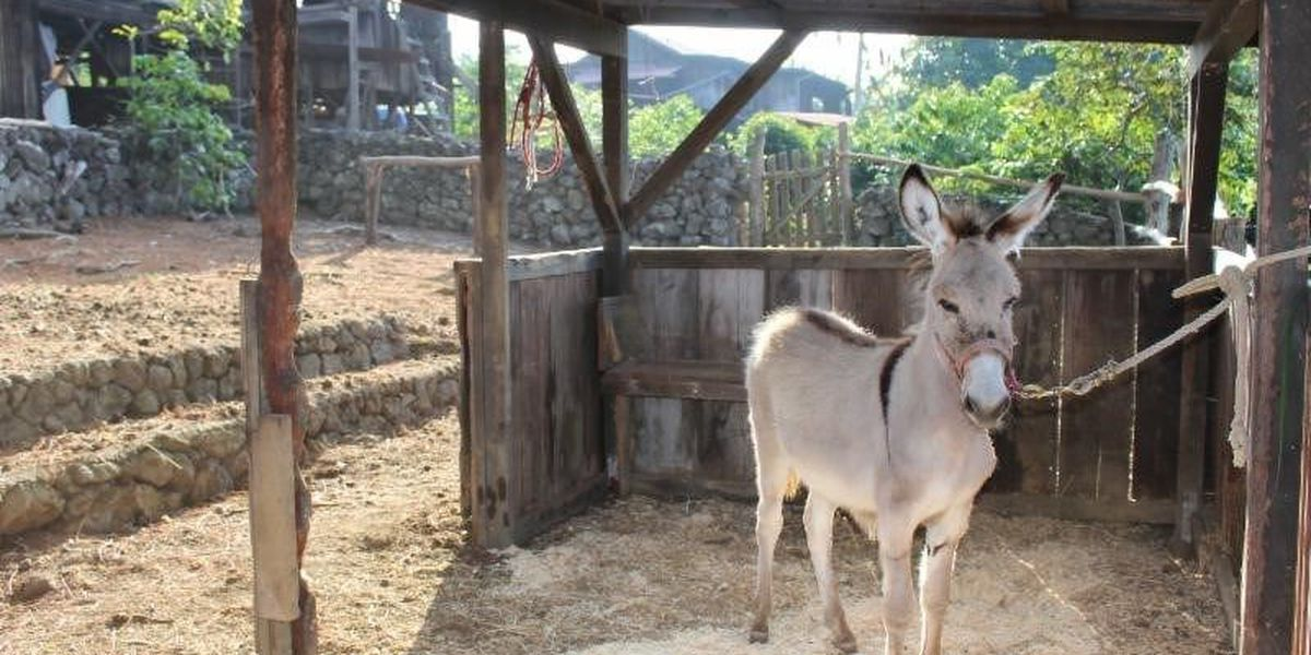 Officials seek homes for feral donkeys on the Big Island