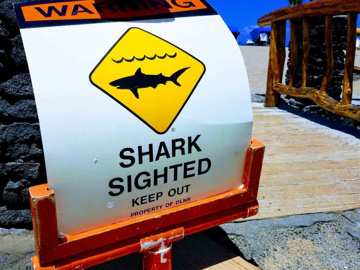 After 2 shark bites off Waikoloa, these paddlers are prepared to jump into action