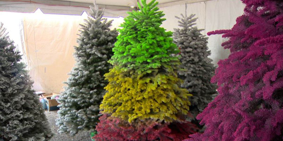 Colorful Christmas trees are a thing, and 'Mr. Christmas Tree' is stocked up