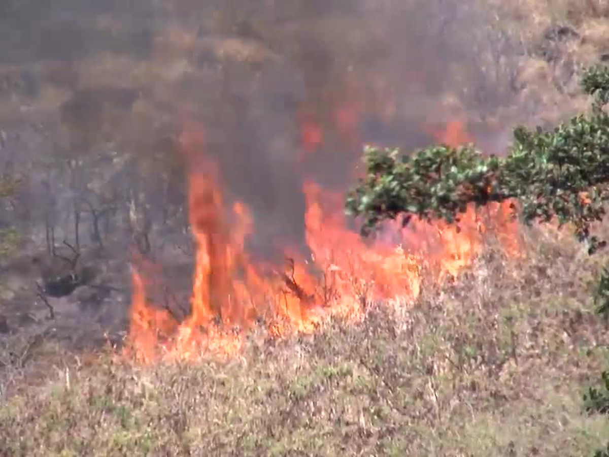 Honolulu firefighters contain stubborn brush fire along Waahila Ridge
