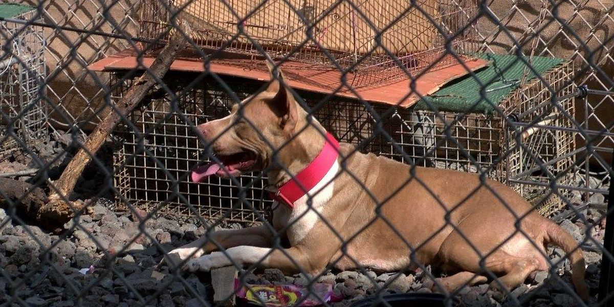 Homeless and their dogs moving back into Nimitz area, despite pricey new fence