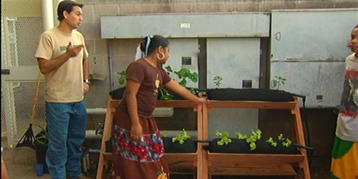 Apply for an Aloha Victory Garden donation