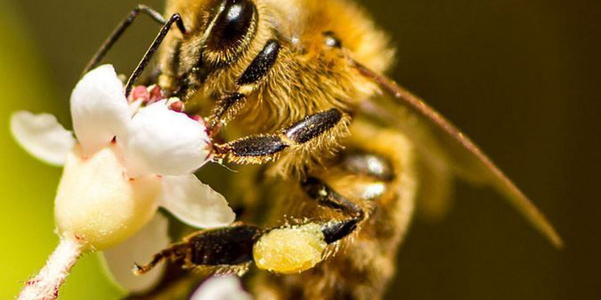 Beekeeper ordered to pay bills for neighbor who was stung