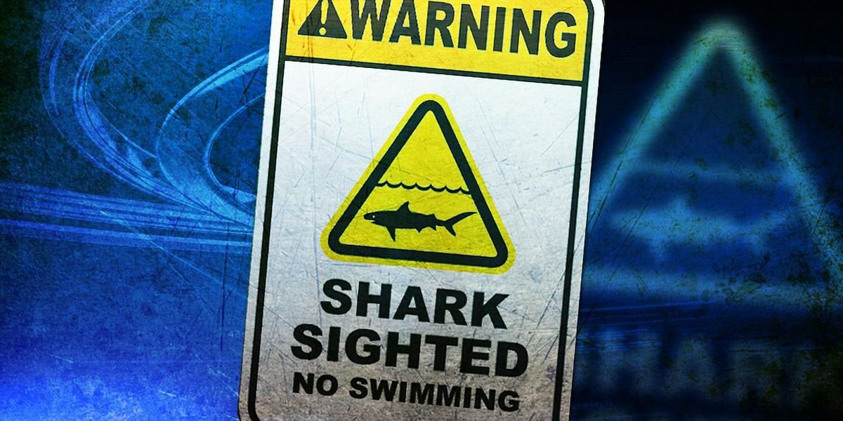 Warning signs posted at Laniakea Beach following tiger shark sighting