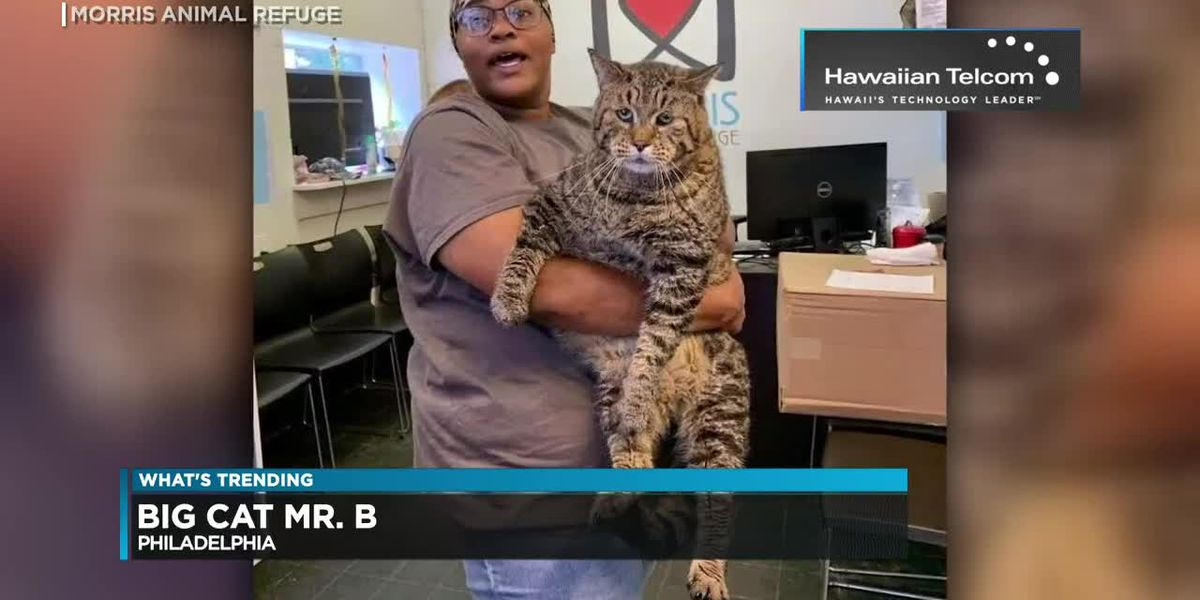 What's Trending: Is that really a CAT?! Mr. B is going viral