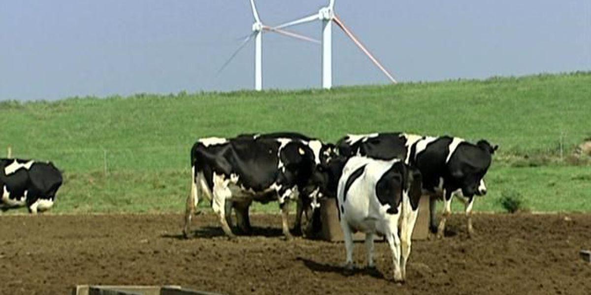 Permits revoked for controversial Kauai dairy