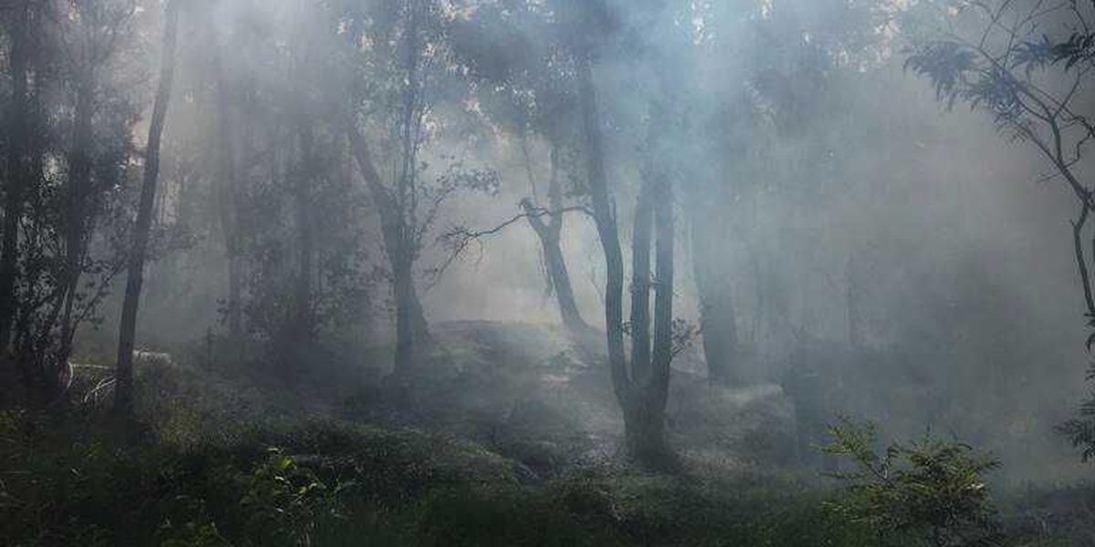 Witnesses sought to Big Island fire that burned koa, ohia trees