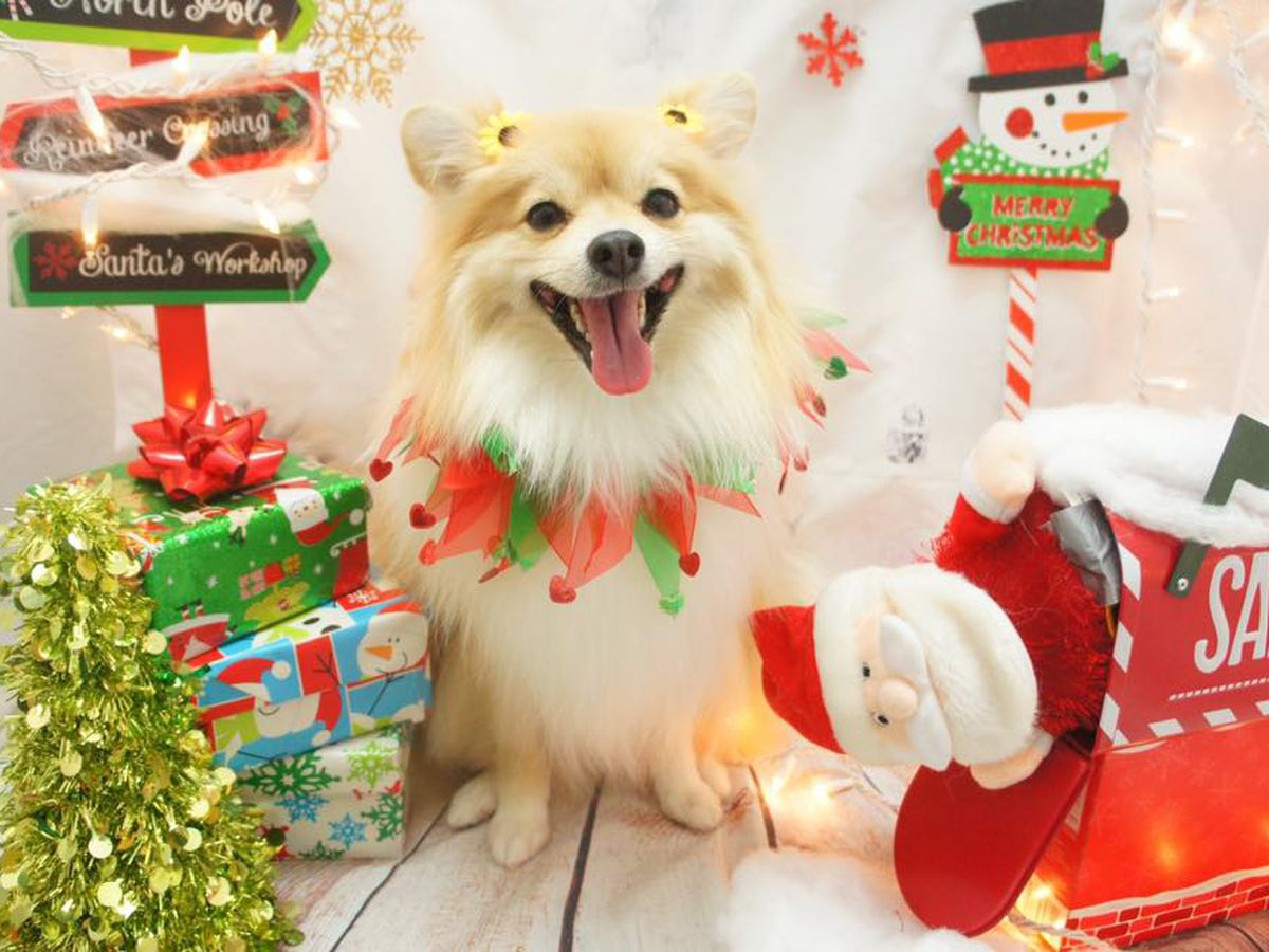 PHOTOS: 'Tis the season for dressing furry friends up for the holidays