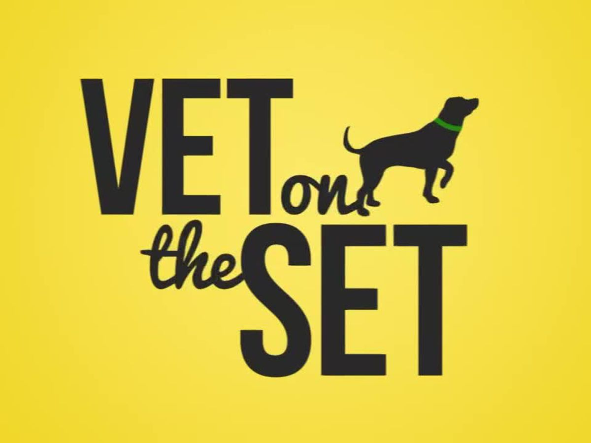 Vet on the Set: Cat communication