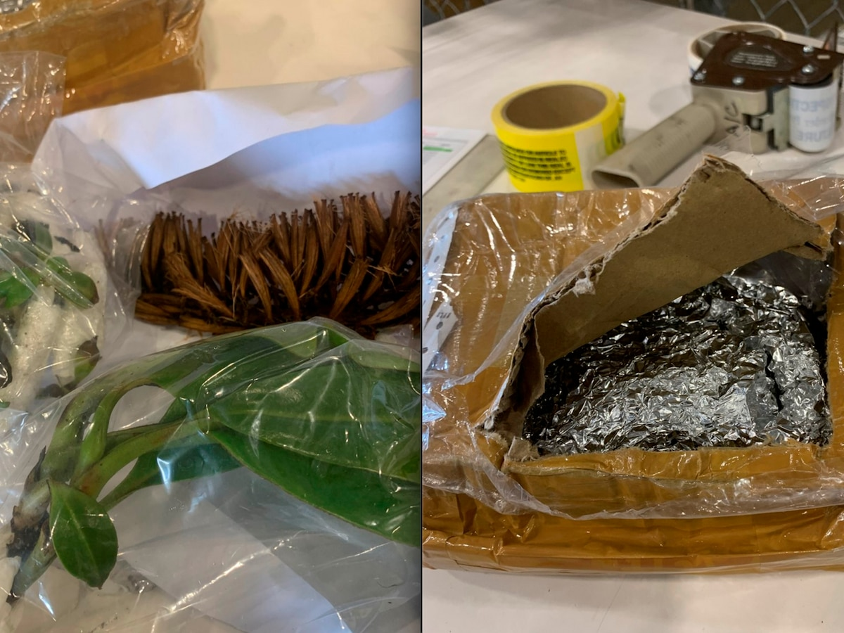 Endangered plants from Malaysia intercepted in Honolulu