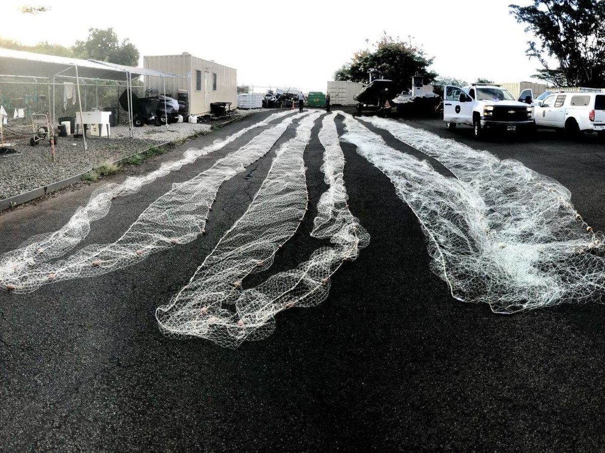 DOCARE officers seize over 1K feet of illegal lay nets from Windward Oahu