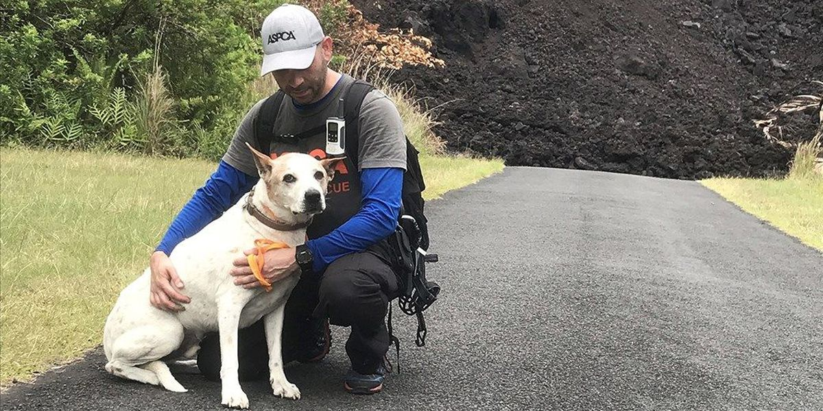 Groups rescue more than 250 animals from lava-impacted communities