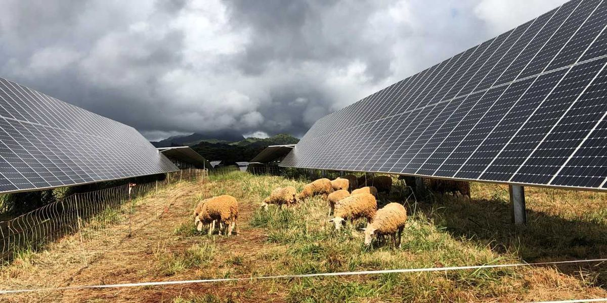 Land that once grew sugar cane now provides renewable energy for Kauai