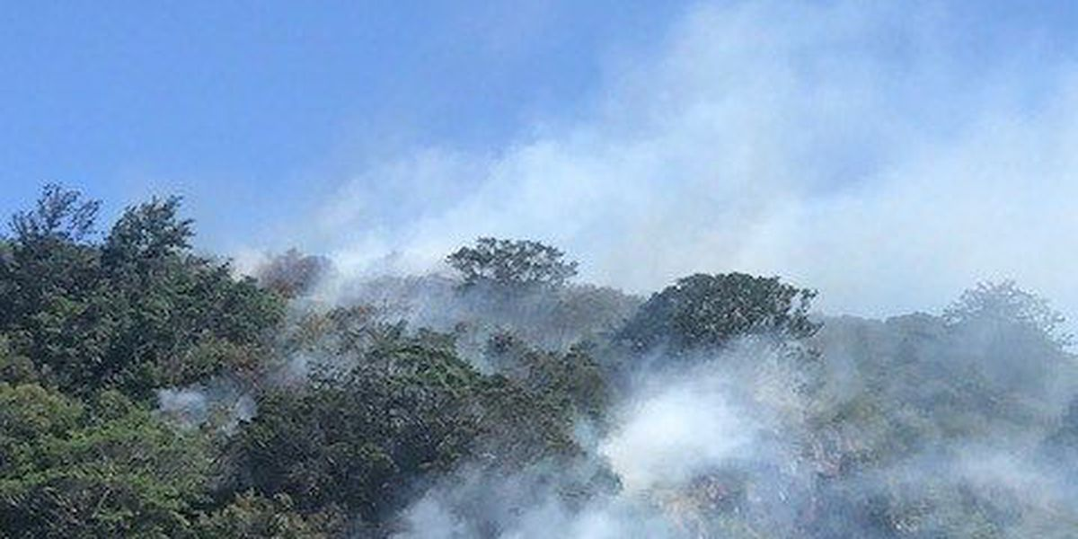 Brush fire burns up to 3 acres in Waimea Valley