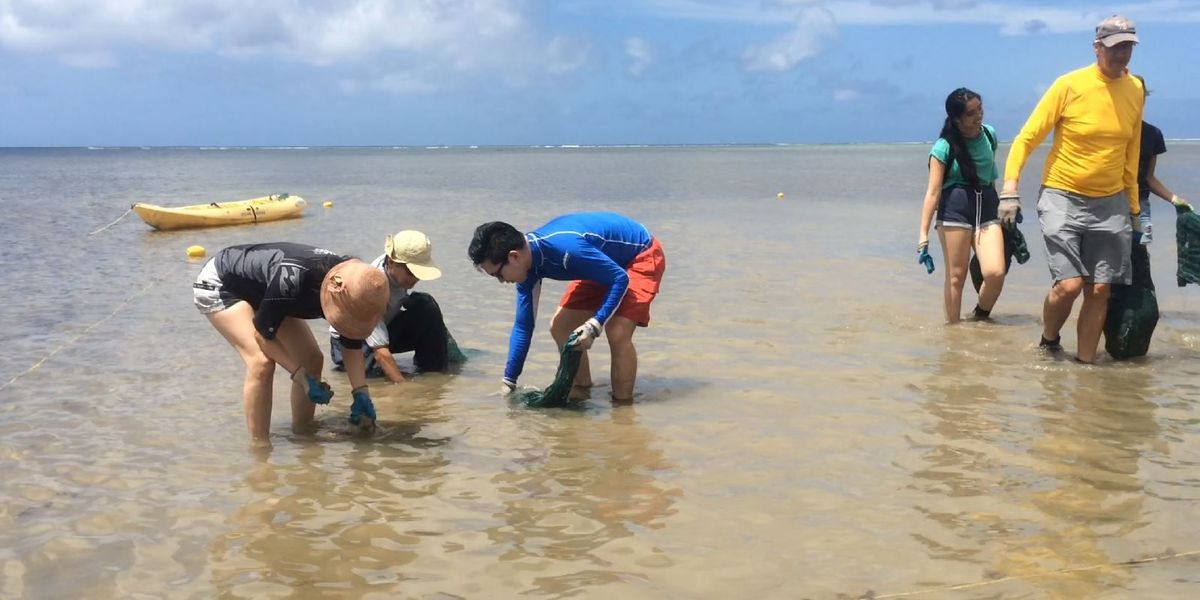 3K pounds of invasive algae removed from Maunalua Bay