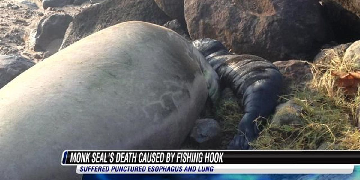 Monk seal pup dies after swallowing fishing hook
