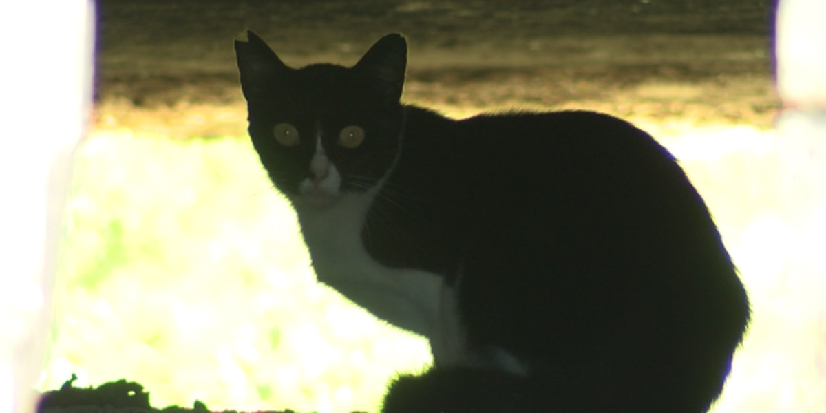 State harbors want crackdown on feral cats – and people who feed them
