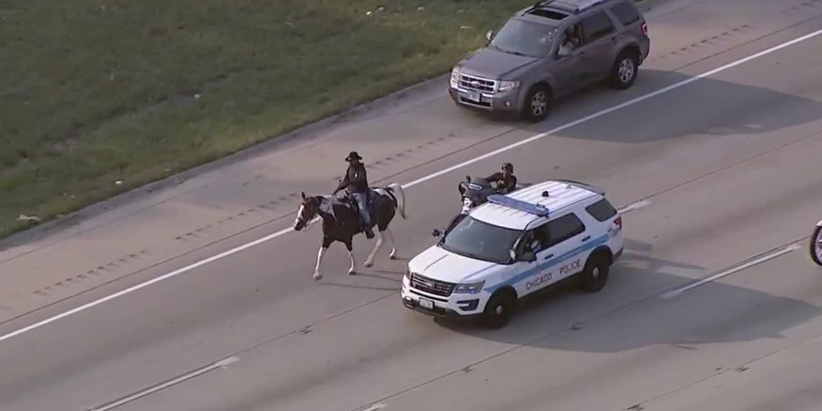 RAW: Activist calls for youth funding as he stalls traffic in Chicago horseback ride